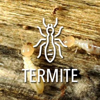 Etat parasitaire termites diagnostic immobilier obligatoire termite